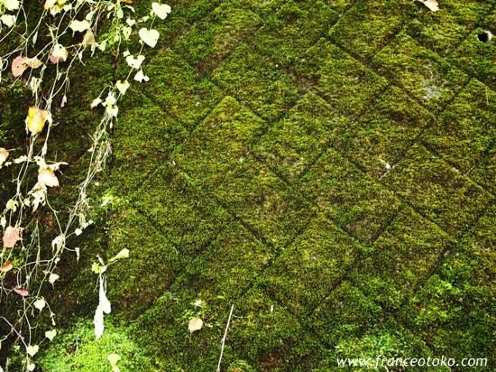 北海道 自然 苔