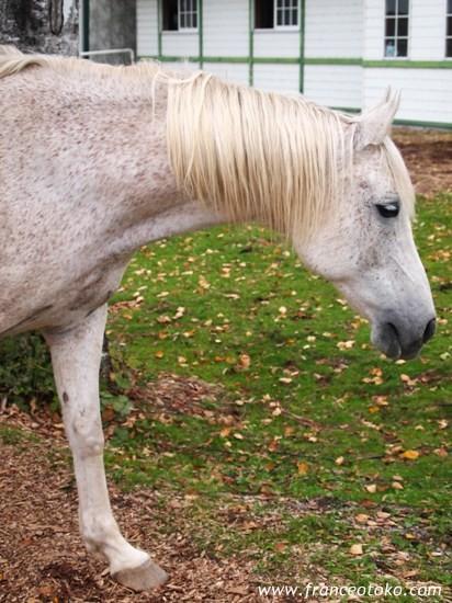北海道 馬