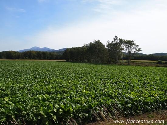 北海道 風景 草原