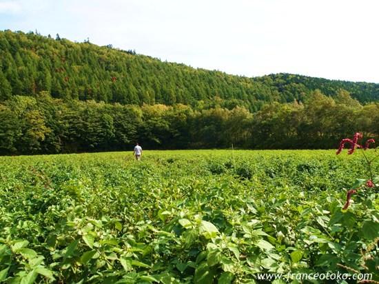 北海道 自然 風景