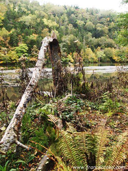 北海道 キンムトー キンム沼 第二の硫黄山 北海道の紅葉