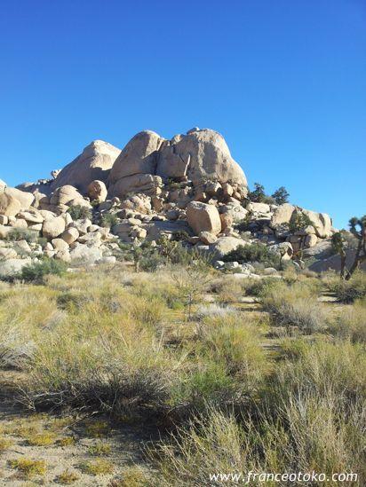 ジョシュア・ツリー国立公園 ロサンゼルス アメリカ