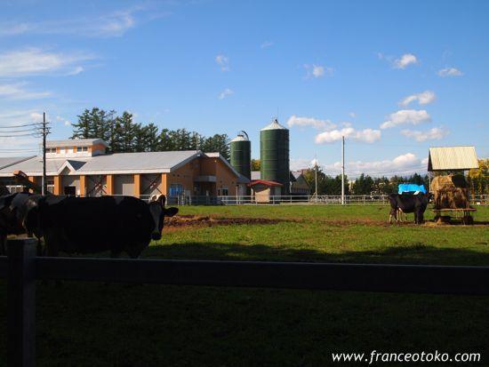 帯広農業高校 モデル 銀の匙