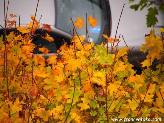 フランスの秋