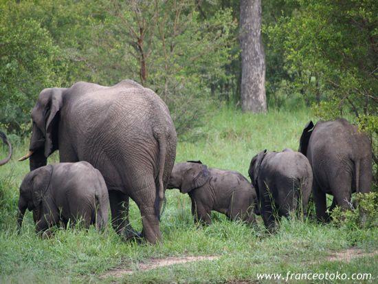 南アフリカ クルーガー国立公園(Kruger National Park)の象