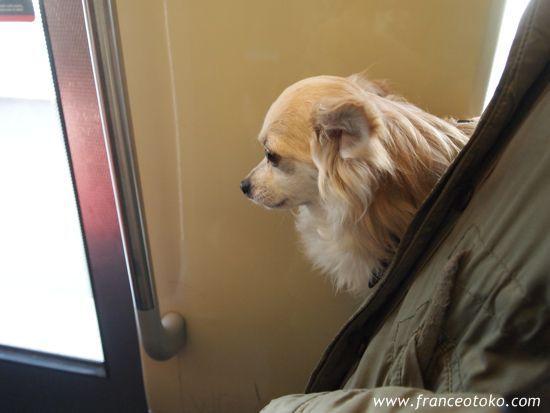 メトロのパリ犬