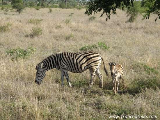クルーガー国立公園(:Kruger National Park)