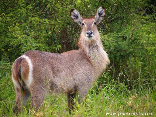 クルーガー国立公園 サファリ