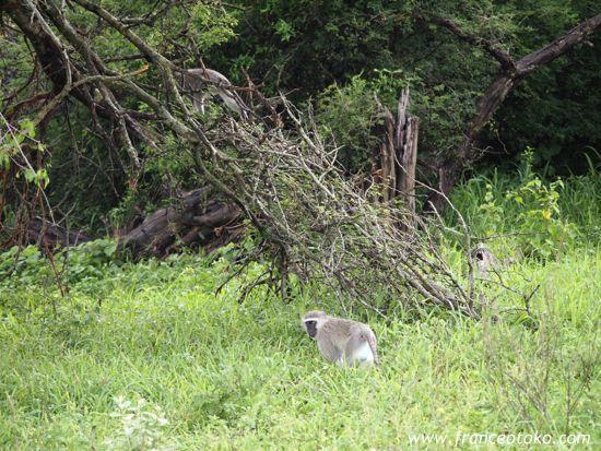 南アフリカ クルーガー公園