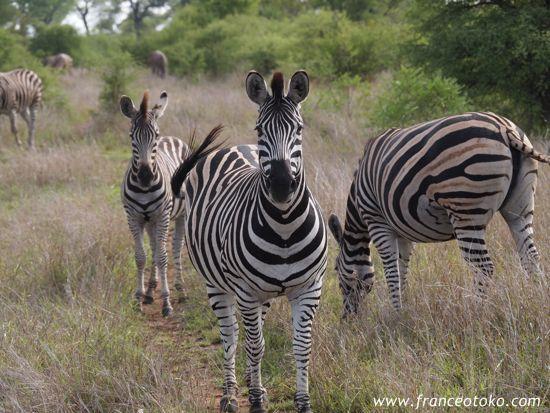 南アフリカのサファリ クルーガー国立公園Kruger National Park