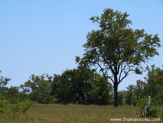 南アフリカ・クルーガー国立公園Kruger National Park