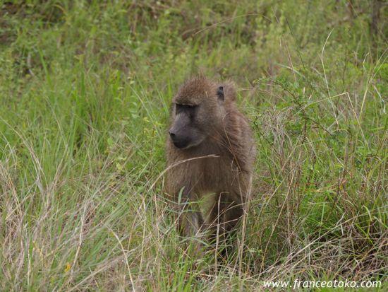 南アフリカのサル