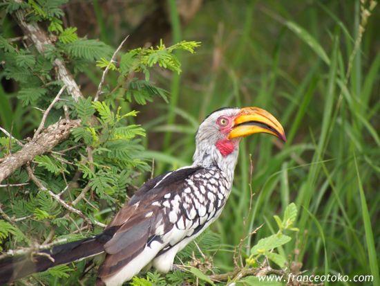 南アフリカ インバリサファリロッジinbalisafarilodge