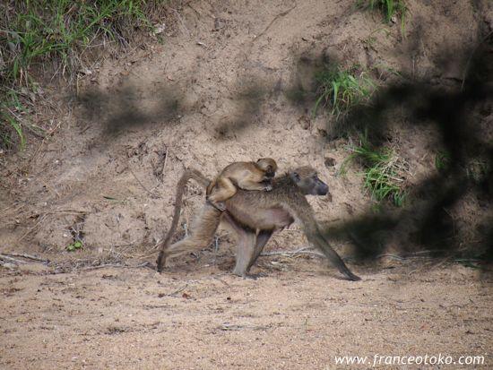 南アフリカ インバリサファリロッジimbalisafarilodge