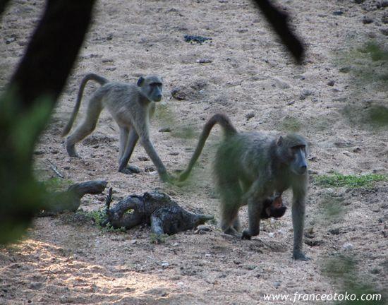 南アフリカ/クルーガー国立公園