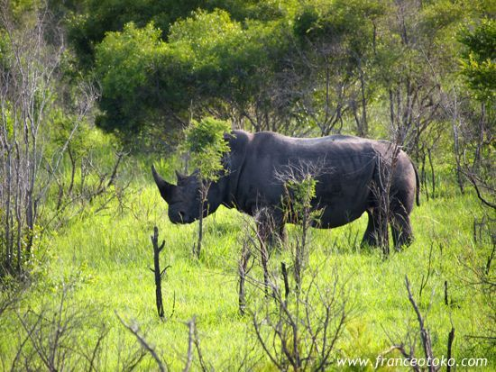 南アフリカ/サファリ/クルーガー国立公園