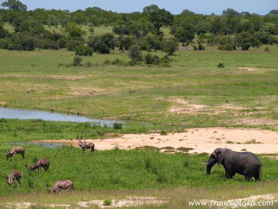 南アフリカ・サファリ/クルーガー国立公園