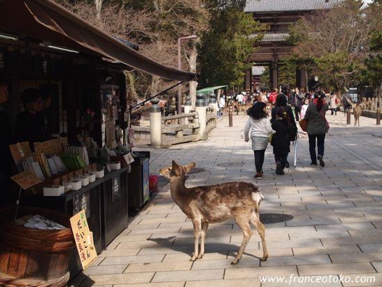 奈良 鹿 東大寺