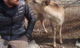 フランス男が奈良で鹿にキッスをしたならそれはトキメキ東大寺☆