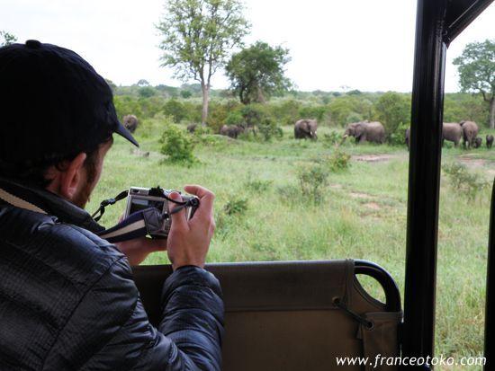 南アフリカのサファリ@クルーガー国立公園