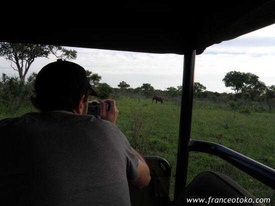 南アフリカのサヴァンナ