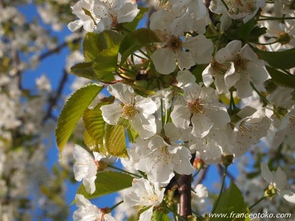 フランス 春