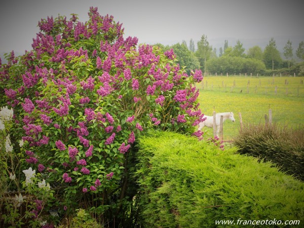 フランス ノルマンディ 自然