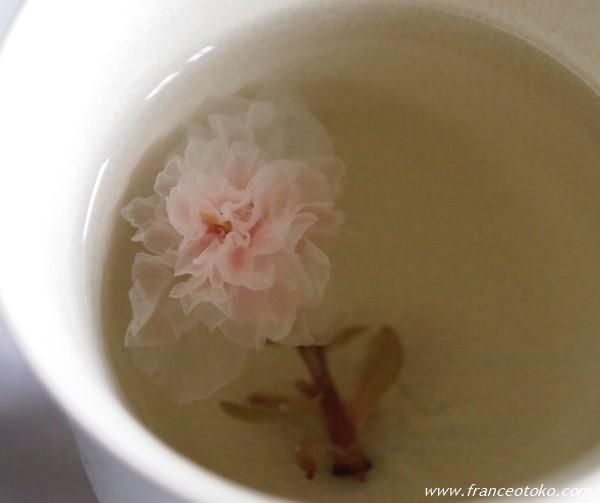 フランス ノルマンディ 桜のお茶