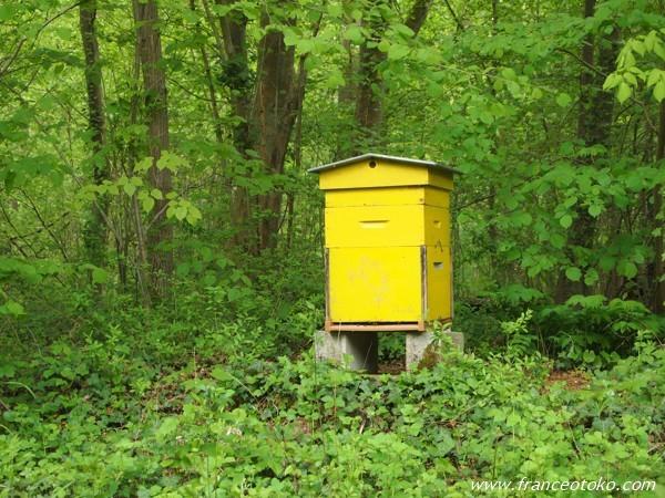 paris vexin フランスのハチミツ養蜂家
