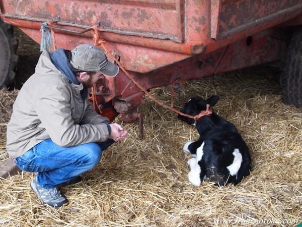 フランス 農場 牛