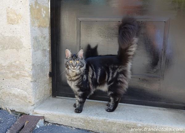 フランス ネコ