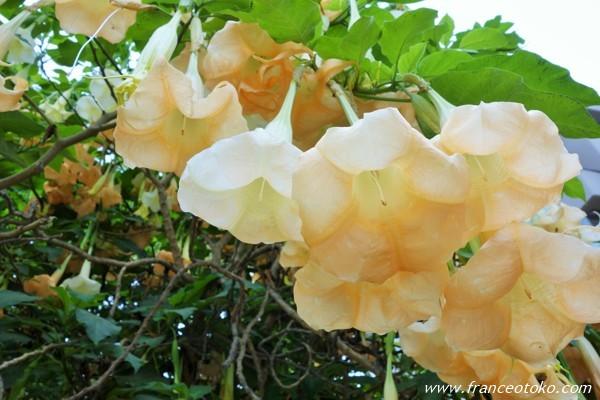 ペルー 花