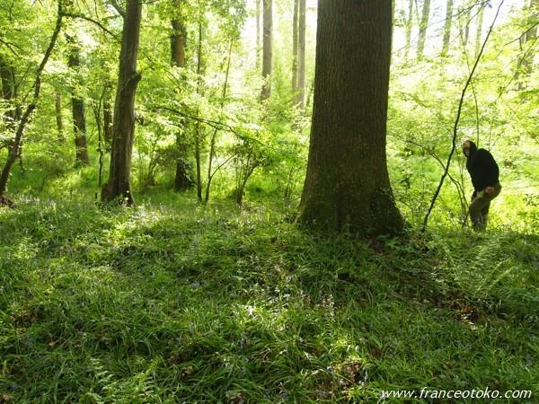 フランス・ノルマンディの森
