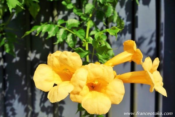 フランス 花