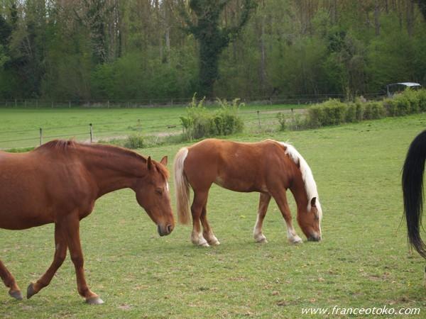 フランスの馬