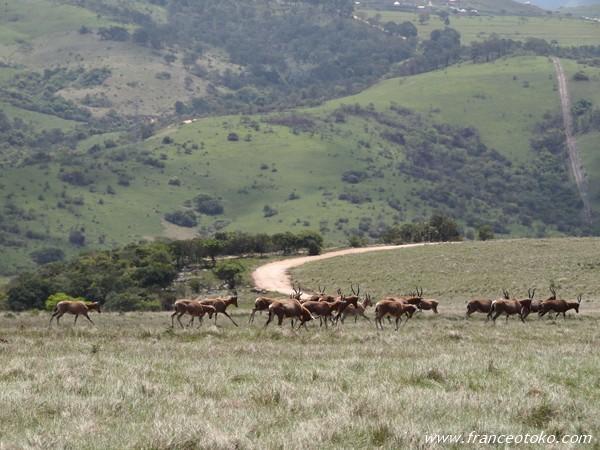 南アフリカ サファリ