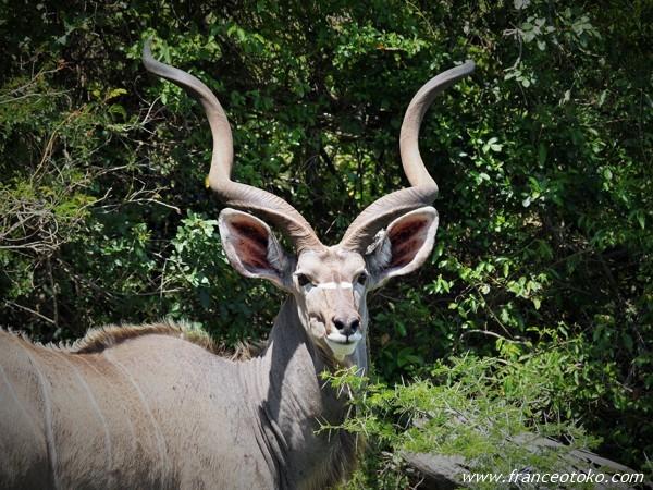 南アフリカ 動物