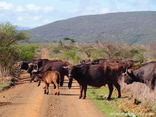 南アフリカ サバンナ