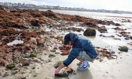 遊び人フランス男がブルターニュ海辺で磯遊びに夢中