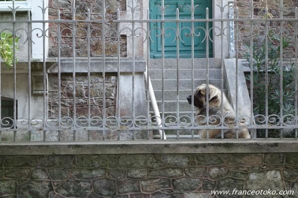 フランス 犬