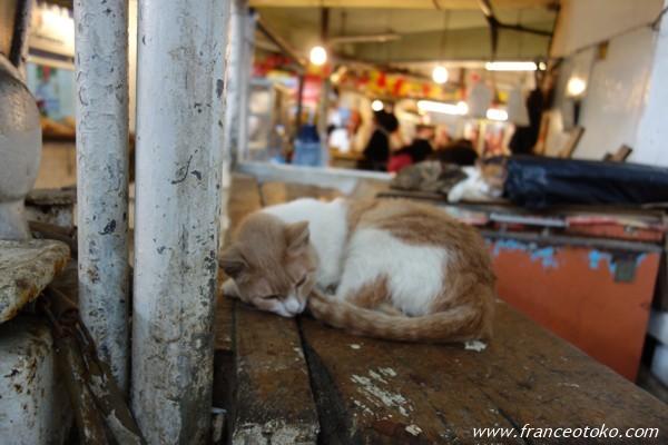 ペルー 猫