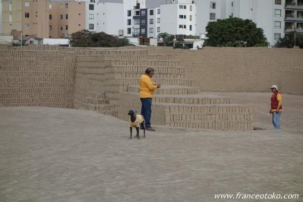 ペルー 犬