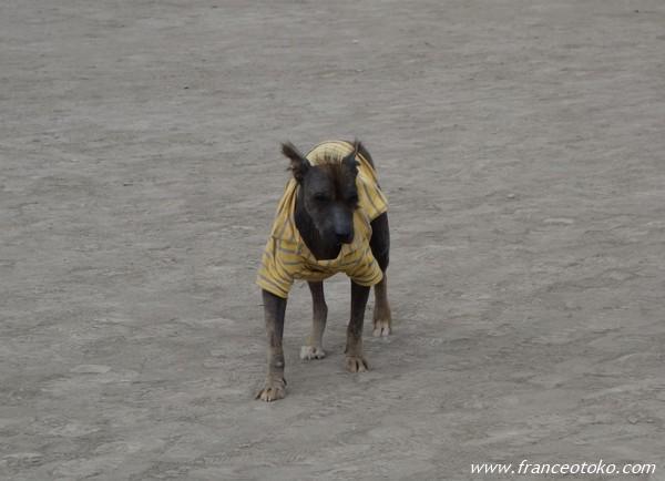 かわいくない犬