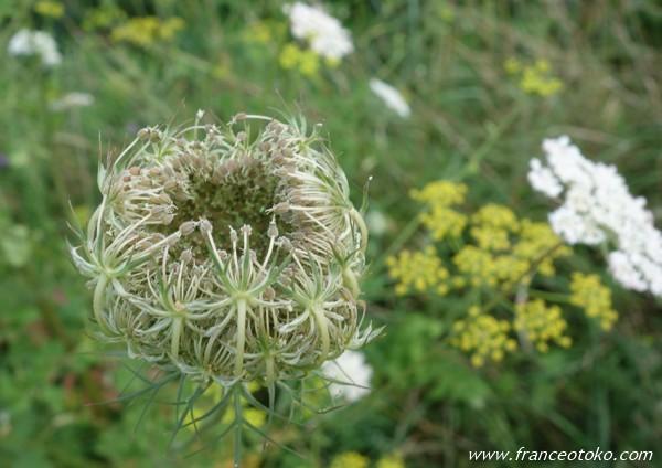 フランス 植物