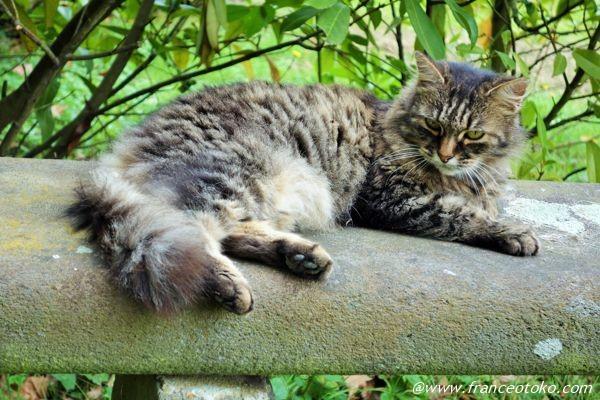 フランスのネコ
