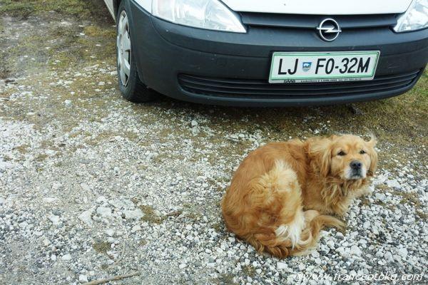 スロベニア 犬