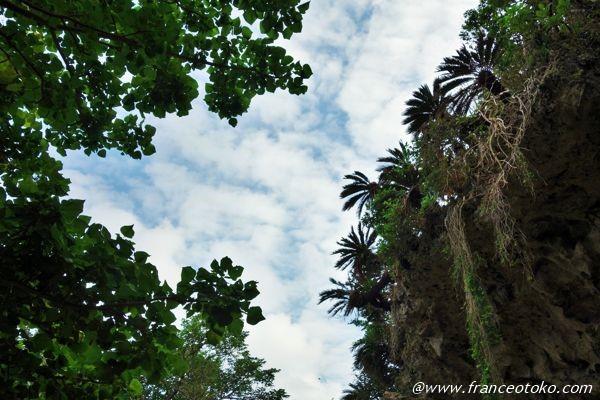 沖縄 自然