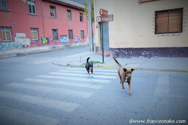 サンティアゴ 野良犬