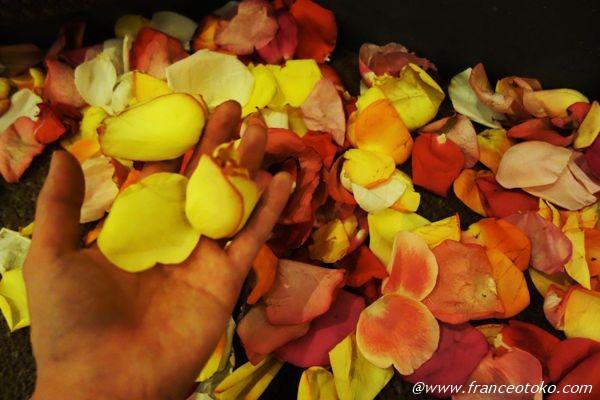 バラの花びら