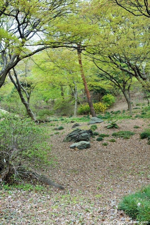 東京 庭園 観光